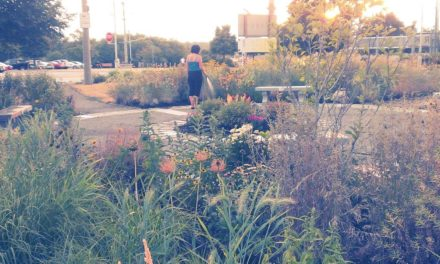 Local Volunteer finds meaning to life in Greenspace