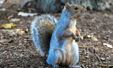 Think Like a Squirrel