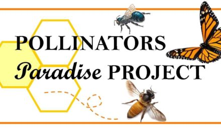 Feed Pollinators!  Donate a Native Plant.