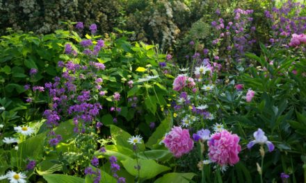 Six ways for You, for Everyone, to Love your Garden Harder