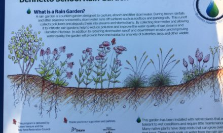 Bennetto Students Build a Rain Garden