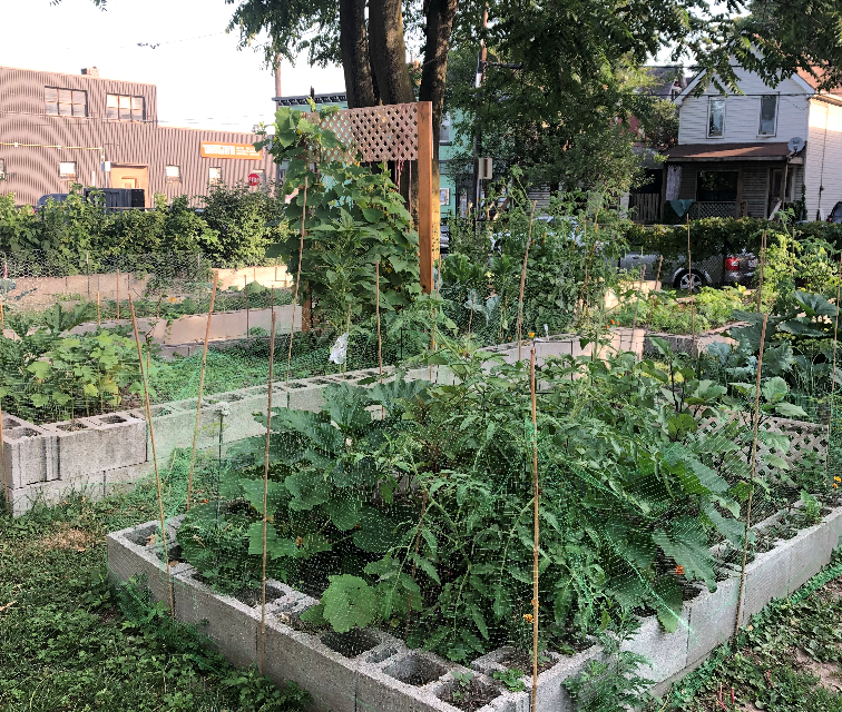 Community Gardens Re-Open!
