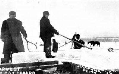 ICE HARVEST ON HAMILTON BAY