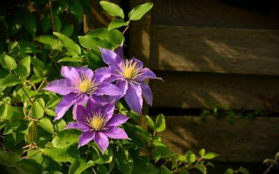 10 Front Garden Design Guidelines